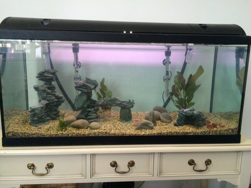 Large fish tank - 190L Lights/filter/heaters whole set up