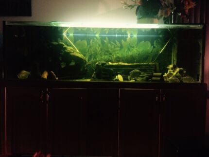 2m Fresh water fish tank with fish