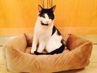 Beautiful very friendly & Playful 16months cat