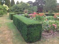 GK Gardening Servisece
