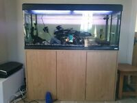 200L tropical fish tank