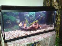 Fish Tank 180 l