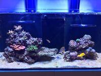 Marine Reef Tank FULL SYSTEM - RedSea Reefer 350 / Hydra 26HD / Deltec / Jebao