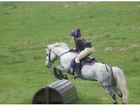 Amazing 12.2h Pony!