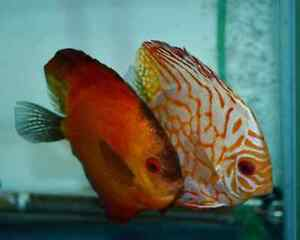 Tropical Fish Tank Cleaning Service London Ontario image 8