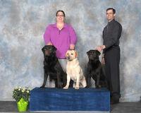CKC Champion Labrador Retrievers