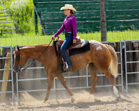 2008 Appaloosa mare for sale *Video added*