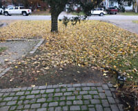 Fall Leaf Remoal / Garden Bed CleanUp l & Eavestrough Cleaning