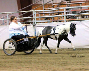 Miniature Horse and Small Pony Driving