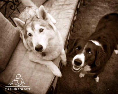 Wanted: URGENT HOUSE/PET SITTERS FOR 23RD DEC TO 15 JAN