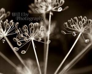 Fine Art Photograhy