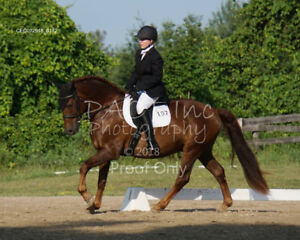 DRESSAGE HORSE FOR PART BOARD