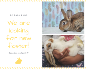 We are Looking for Foster Families!!