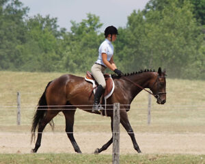 6 year old TB mare