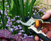 Is Your Yard A Jungle? Summer Cut Back Time~ The Town Gardener
