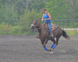 Horse Boarding Available South West of Edmonton Edmonton Edmonton Area image 4