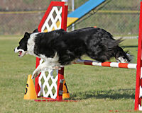 AGILITY TRIAL and more on Thanksgiving weekend.