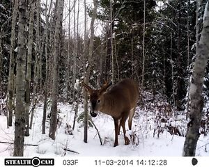 Looking for a small lot for a deer camp