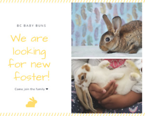 BC Baby Buns Looking for Fosters!
