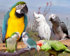 Are u looking for safe and happy forever home for ur birds plz