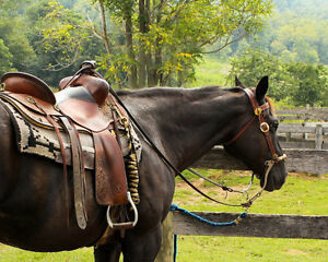 BC based Equestrian Wholesale Products Retailer for sale