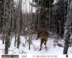 Looking for a small camp for deer hunting