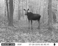Looking For Hunting Camp Members