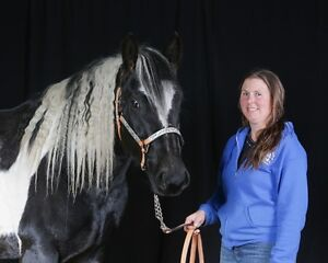 2013 Percheron/Canadian/Paint cross 16hh mare