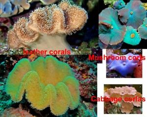 Coral buy out from you
