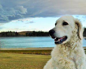 "A Pet Vacation that is anything but ""Ruff"""