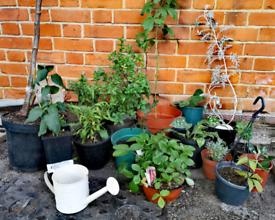 14x Outdoor Plants Large Bundle:Flowers, Shrubs, Vine