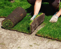 Top Sodding Experts In The GTA--> SPECIAL SUMMER OFFERS