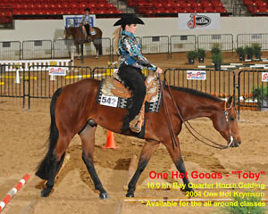 One Hot Goods AQHA Gelding - For Sale or Lease