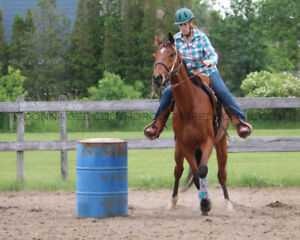 Available at Trinity Trotters Equine: Sniper