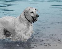 Heartwarming Pet Photography & Video