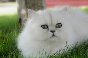 Rehoming Cat