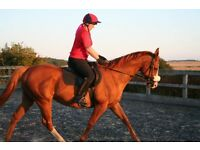 16HH TB For Part loan/share