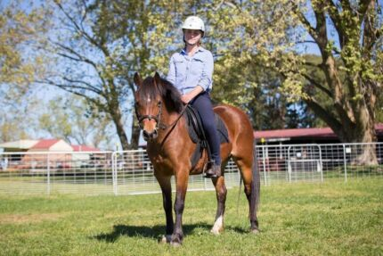 12.1hh Welsh Pony Mare