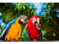 Wanted: passionate volunteers to help save the endangered macaws.