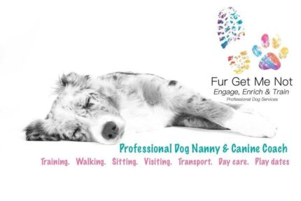 Dog Trainer | Positive Canine Coach