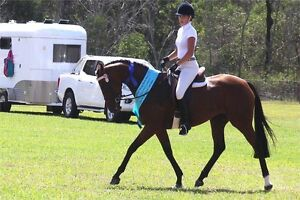 YOUR NEXT SUPERSTAR 14.2HH Rising 4yo OTTB. Reg ANSA and RISA Jimboomba Logan Area Preview