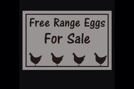 Free range eggs for sale Cordeaux Heights Wollongong Area Preview