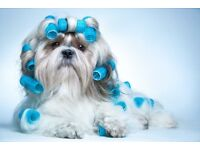 Shear Pawfection Mobile Pet Grooming Spa, covering Ashford and surrounding areas.