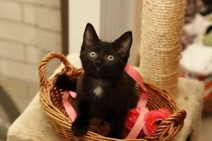 Rescued kitten - Hunter Valley Cat Haven Kurri Kurri Cessnock Area Preview
