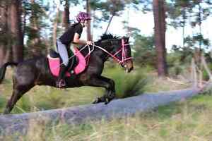 Part lease on property in Bullsbrook- standardbred pony Bullsbrook Swan Area Preview