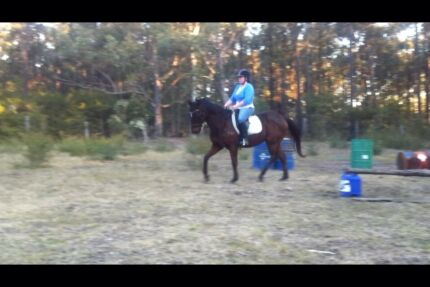 Sweet Natured Bay TB 15.2hh  Glen Martin Dungog Area Preview