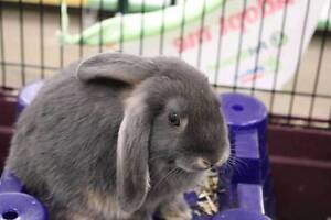 Peter Rabbit, looking for forever home! Mt Gambier Region Preview