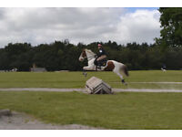 Super jumping/Pony Club Second Pony