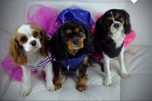 Looking to pamper your pets? Look no further! Claremont Glenorchy Area Preview