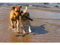 Professional Dog Walker, Boarder and Sitter